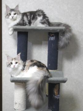 Lupinus_kittens_15041701