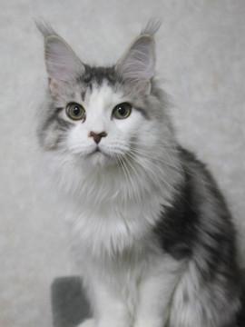 Lupinus_kittens_15041704