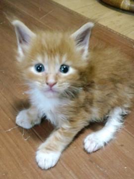 Poppy_kitten1_15072101
