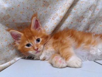 Poppy_kitten2_15082201