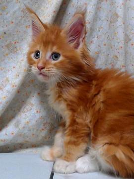 Poppy_kitten2_15082202