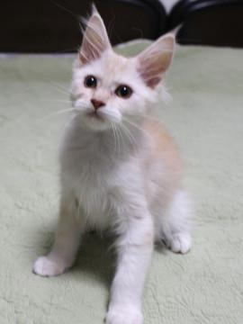 Lara_kitten1_15111201