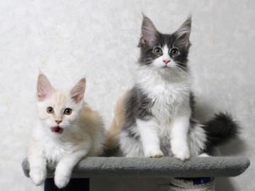 Lara_kittens_15111803