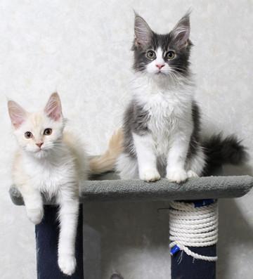 Lara_kittens_15111804