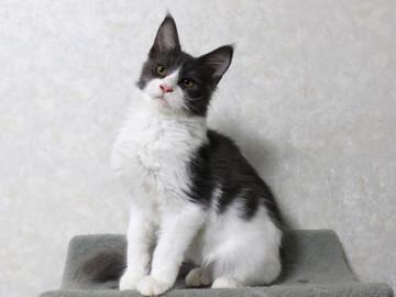 Chan_kitten2_15121201