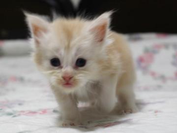 Lara_kitten1_15090103