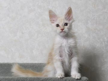 Lara_kitten1_15102608
