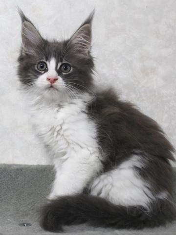 Lara_kitten3_15101403