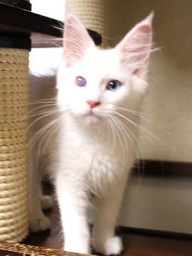 Bell_kitten3_16063001