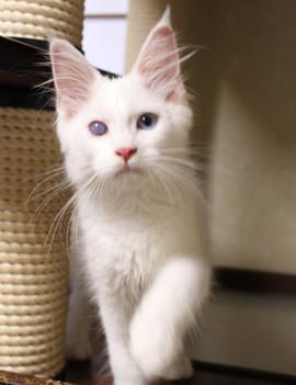 Bell_kitten3_16063002