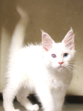 Bell_kitten3_16063003
