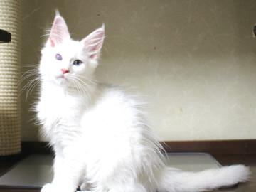 Bell_kitten3_16063004