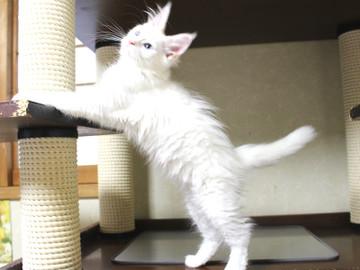 Bell_kitten3_16063005