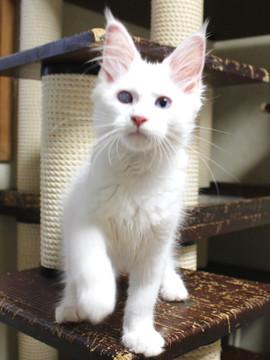 Bell_kitten3_16063007
