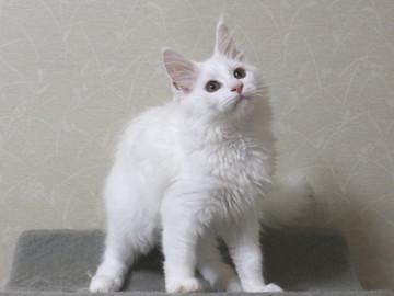 Bell_kitten4_16070401