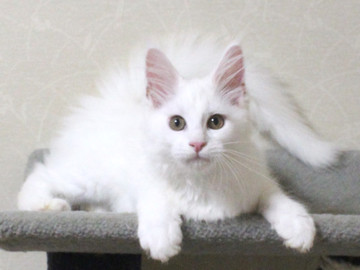 Bell_kitten4_16070402