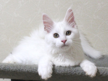 Bell_kitten4_16070403