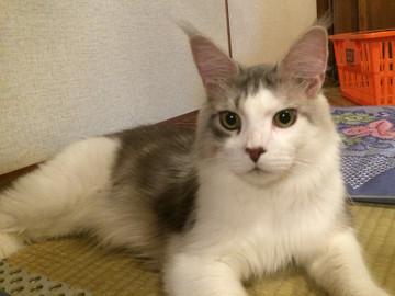 Manato_16071101