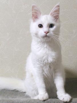 Bell_kitten2_16072101