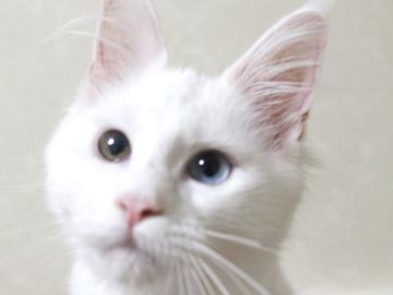 Bell_kitten2_16072102