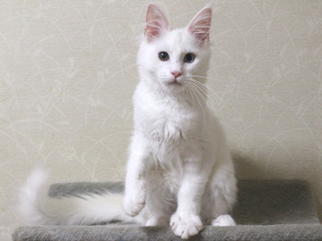 Bell_kitten2_16072104
