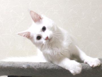 Bell_kitten2_16072105