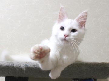Bell_kitten2_16072106