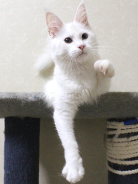 Bell_kitten2_16072108