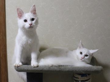 Bell_kittens_16073101
