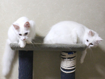 Bell_kittens_16073102
