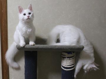 Bell_kittens_16073103
