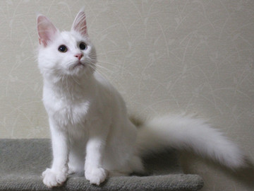 Bell_kitten2_16073102