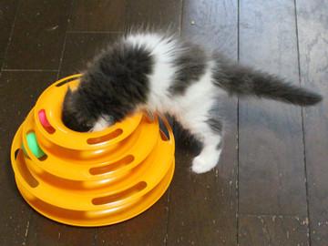 Kittens_16082201