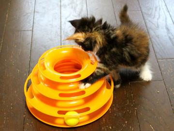 Kittens_16082202