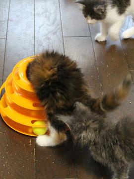 Kittens_16082203