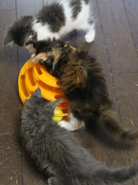 Kittens_16082204