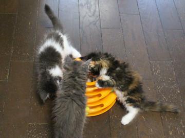 Kittens_16082205