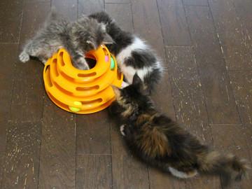 Kittens_16082206
