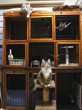 Kittenroom_17041008