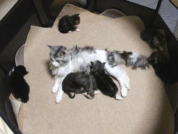 Kittens_17051401