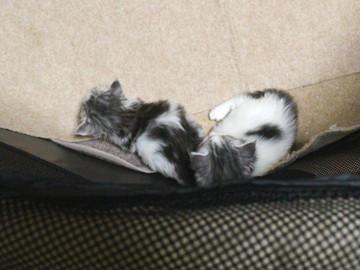 Kittens_17051402
