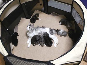 Kittens_17051403