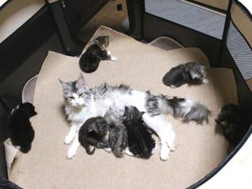 Kittens_17051404