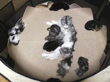 Kittens_17051405