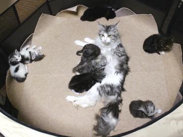Kittens_17051406