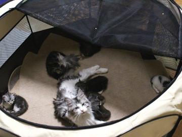 Kittens_17051407