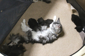 Kittens_17051408