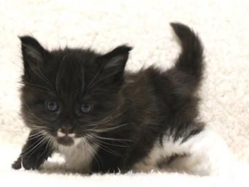 Waco_kitten1_17051601