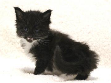 Waco_kitten1_17051602