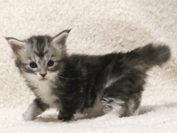 Waco_kitten2_17051602